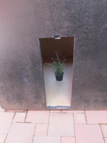 Mediteranska biljka u službi provedbe pokusa!